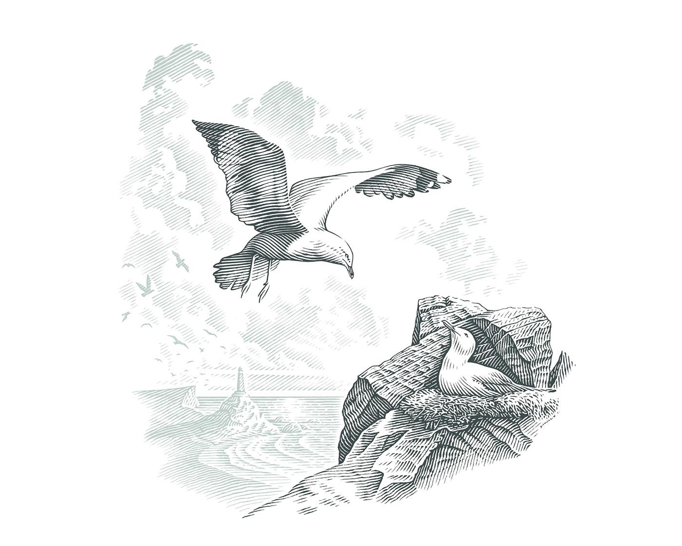 birds engraving etching ILLUSTRATION  line art pen and ink pen drawing scraper board scratch board scratchboard
