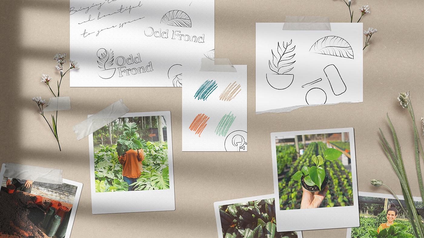 branding  Logo Design plant branding Plant Illustration plants print design  tape design