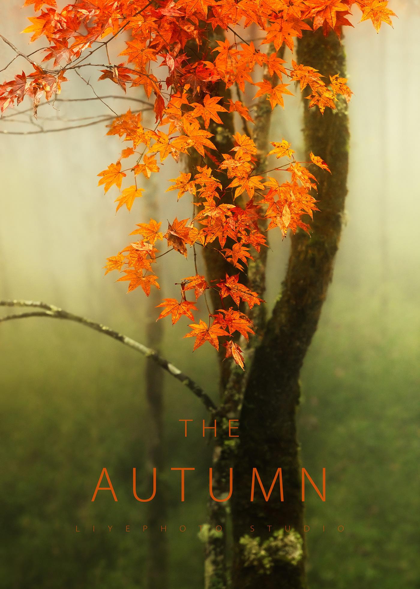 autumn color Landscape Nature Travel