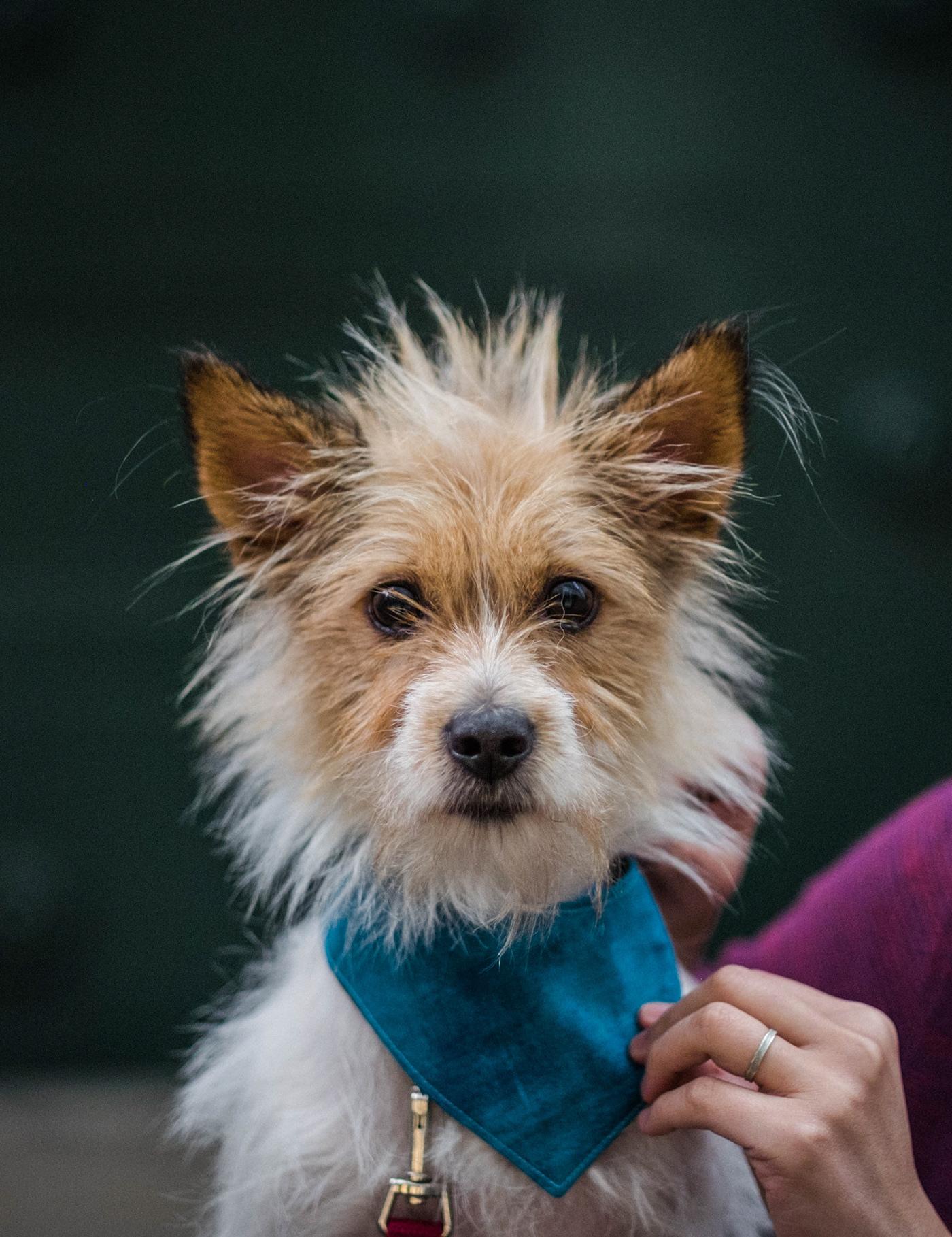 Adobe Portfolio Photography  portrait dog puppy family lighting fujifilm