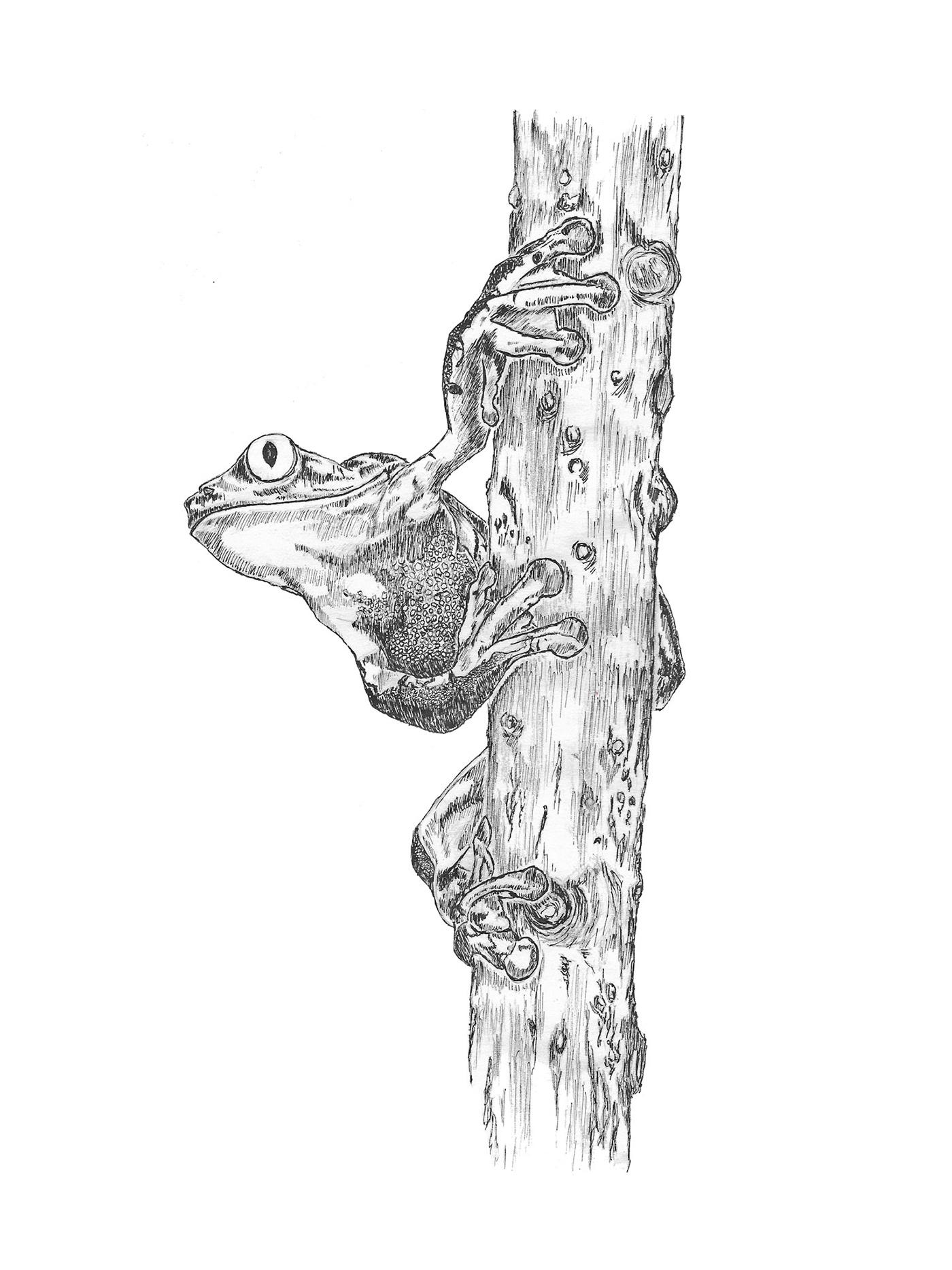 cardinal Cat cheetah frog horse ink wildlife