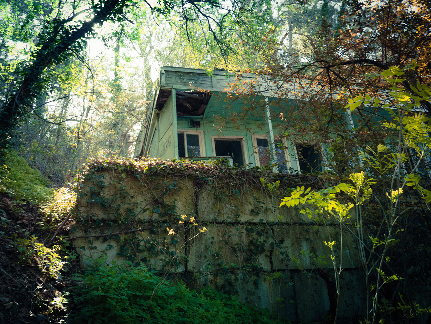 old house house in forest lights in forest forest Green and Yellow