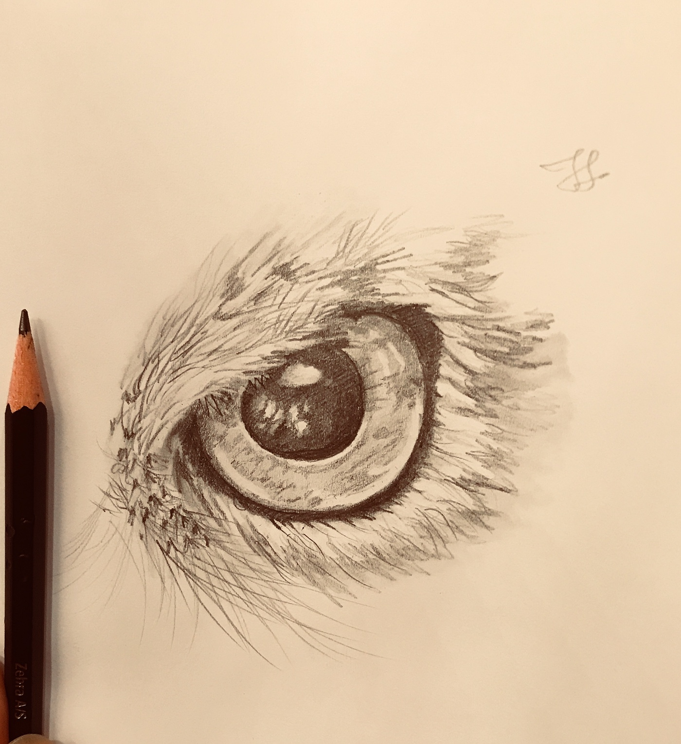 高質量的24張手繪眼睛欣賞