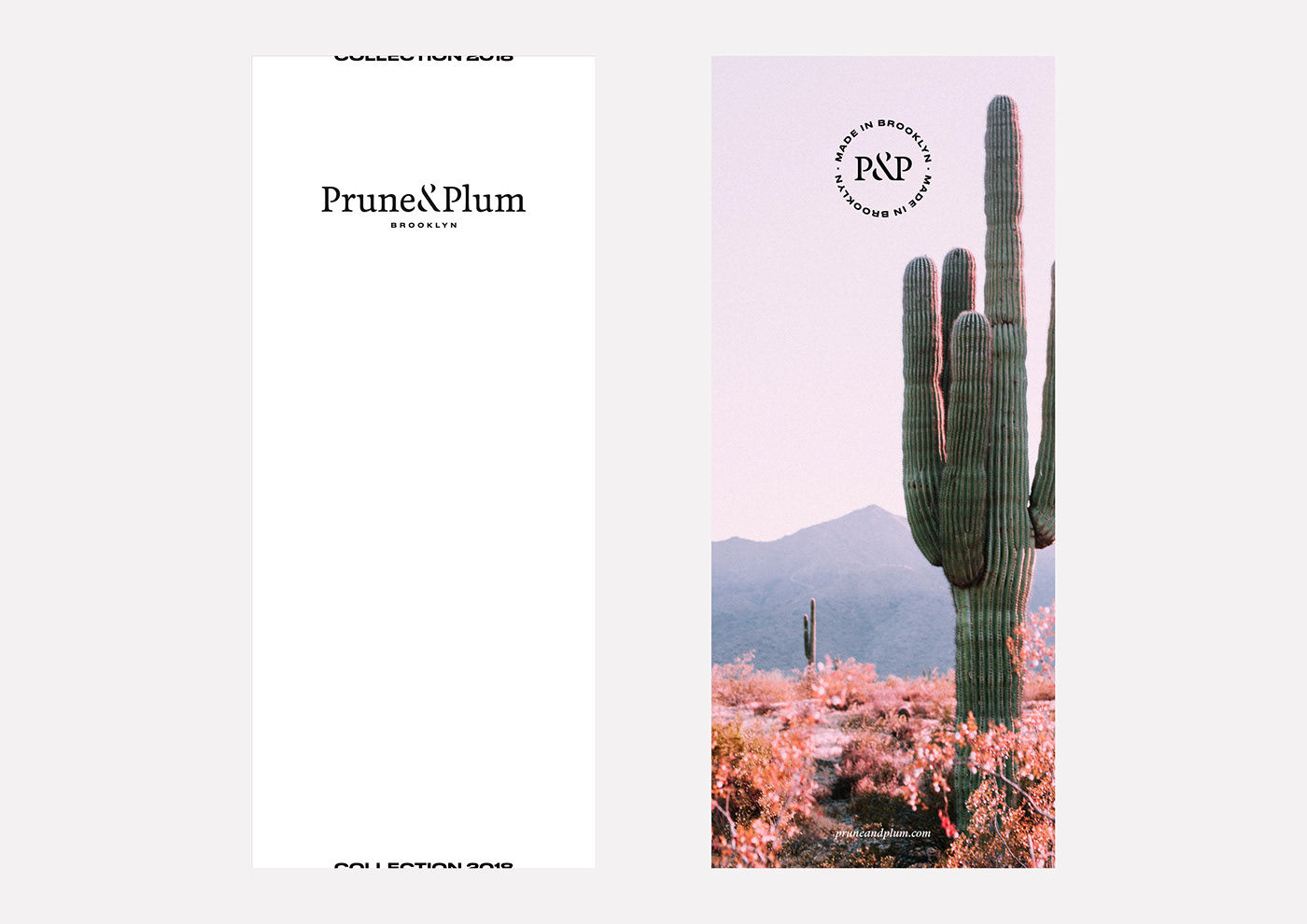 pruneandplum cactus Succulent Brooklyn Made in Brooklyn urban jungle indoor plant ono studio belgium