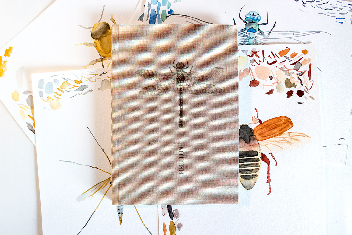 editorial book aquarell watercolor dotwork Insects animals detail insect wing wings transparent