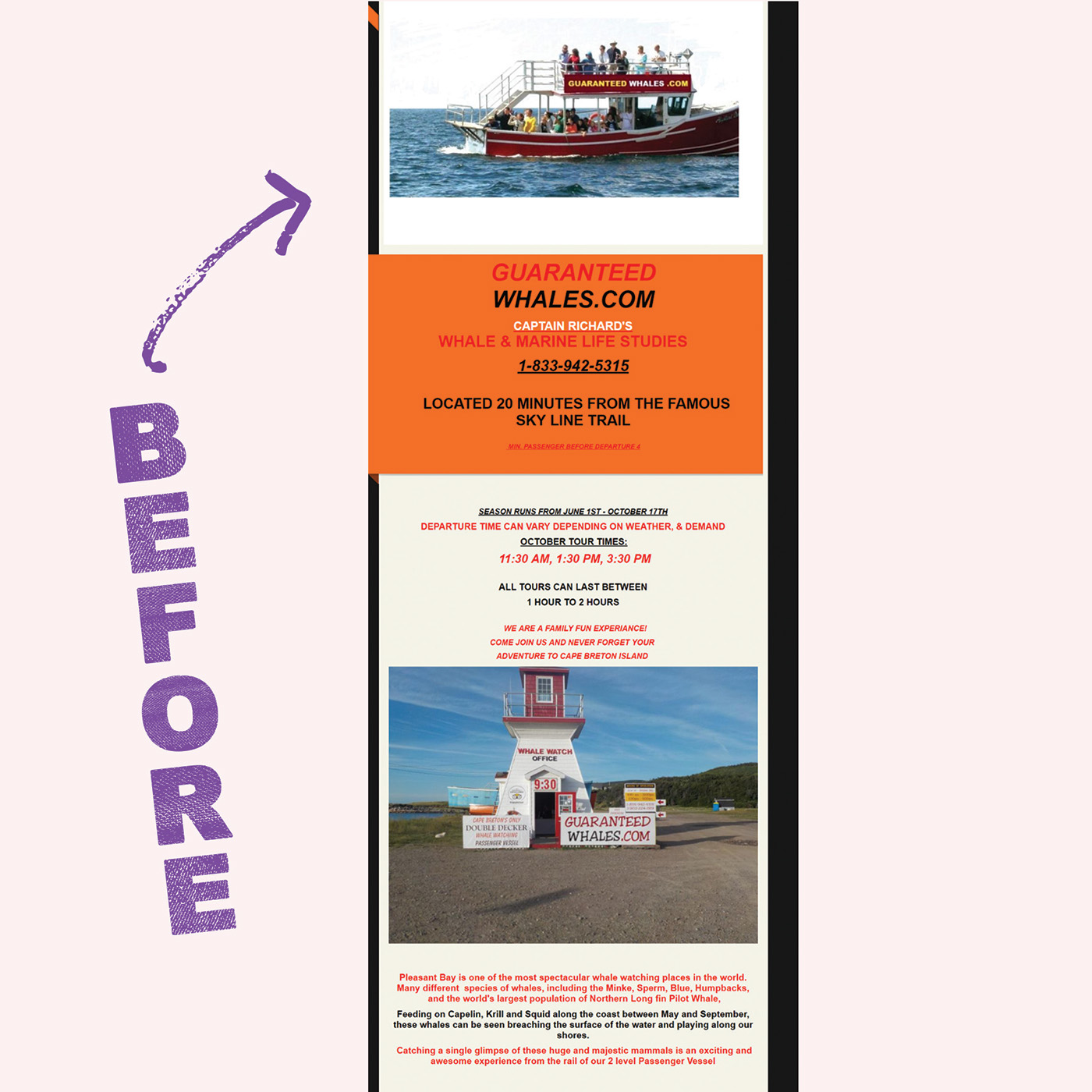 whales whale watching whale tours Web Design  mobile design sea life
