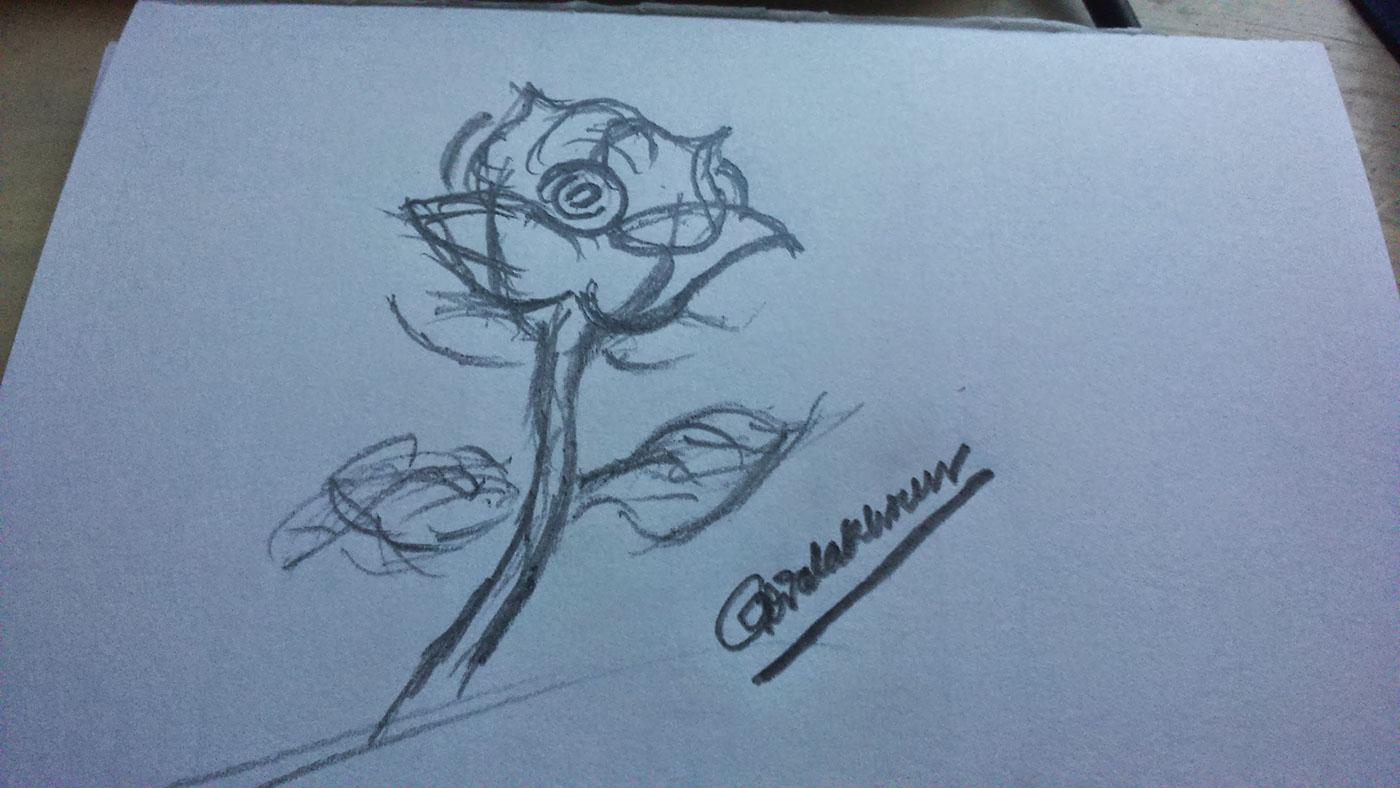 高質感的19款玫瑰花水彩素描欣賞