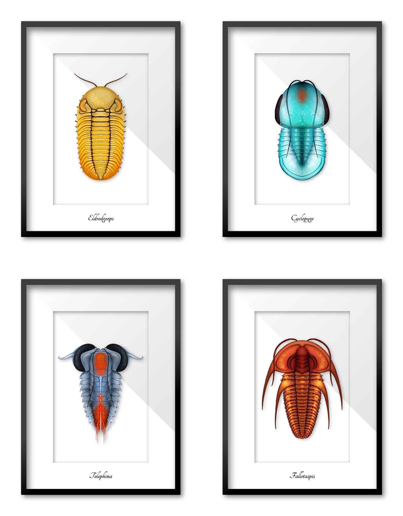 Fossil science animal prehistoric marine sea creature biology Nature Critter
