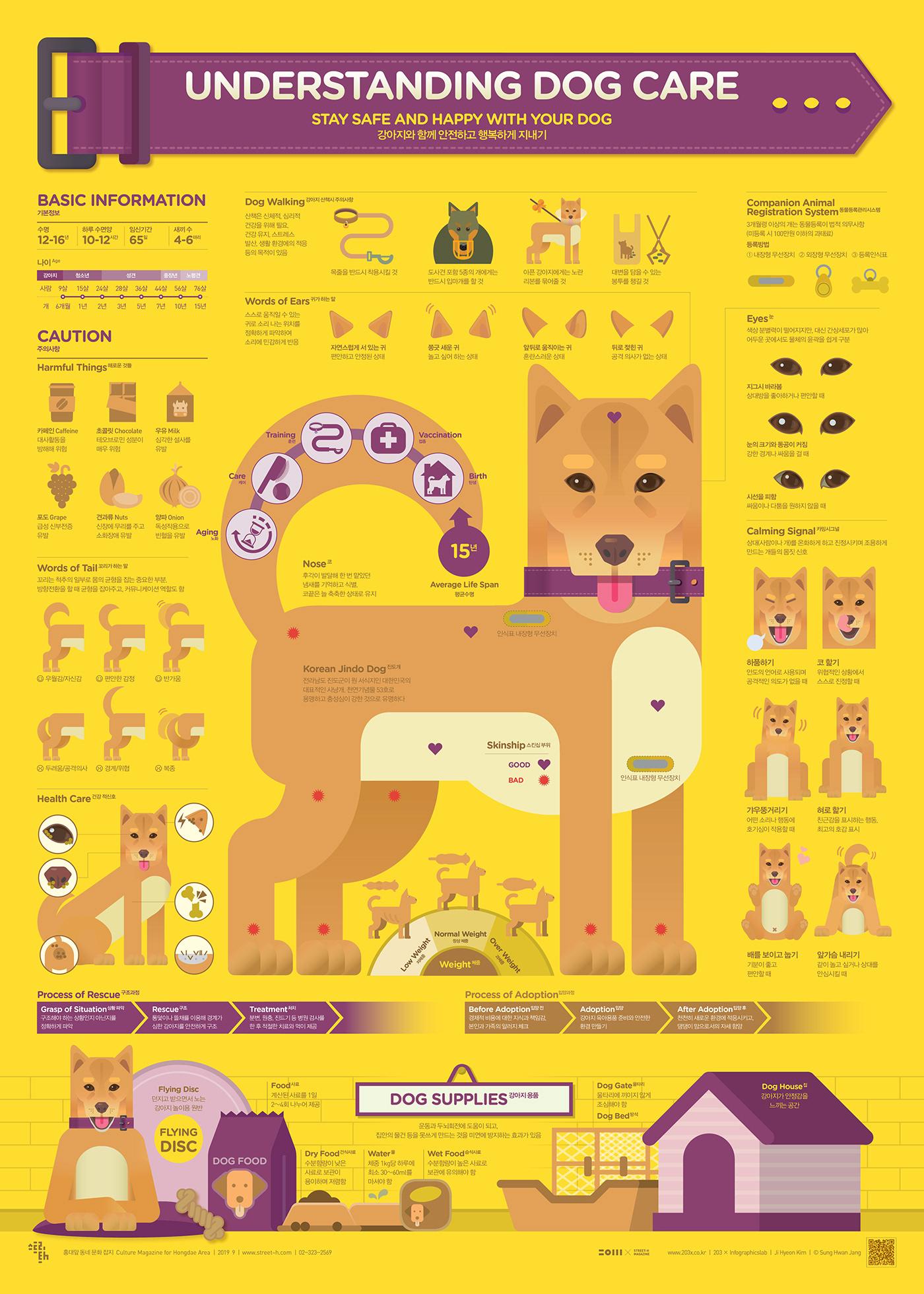 poster infographic dog graphic design  streeth editorial design  data visualization