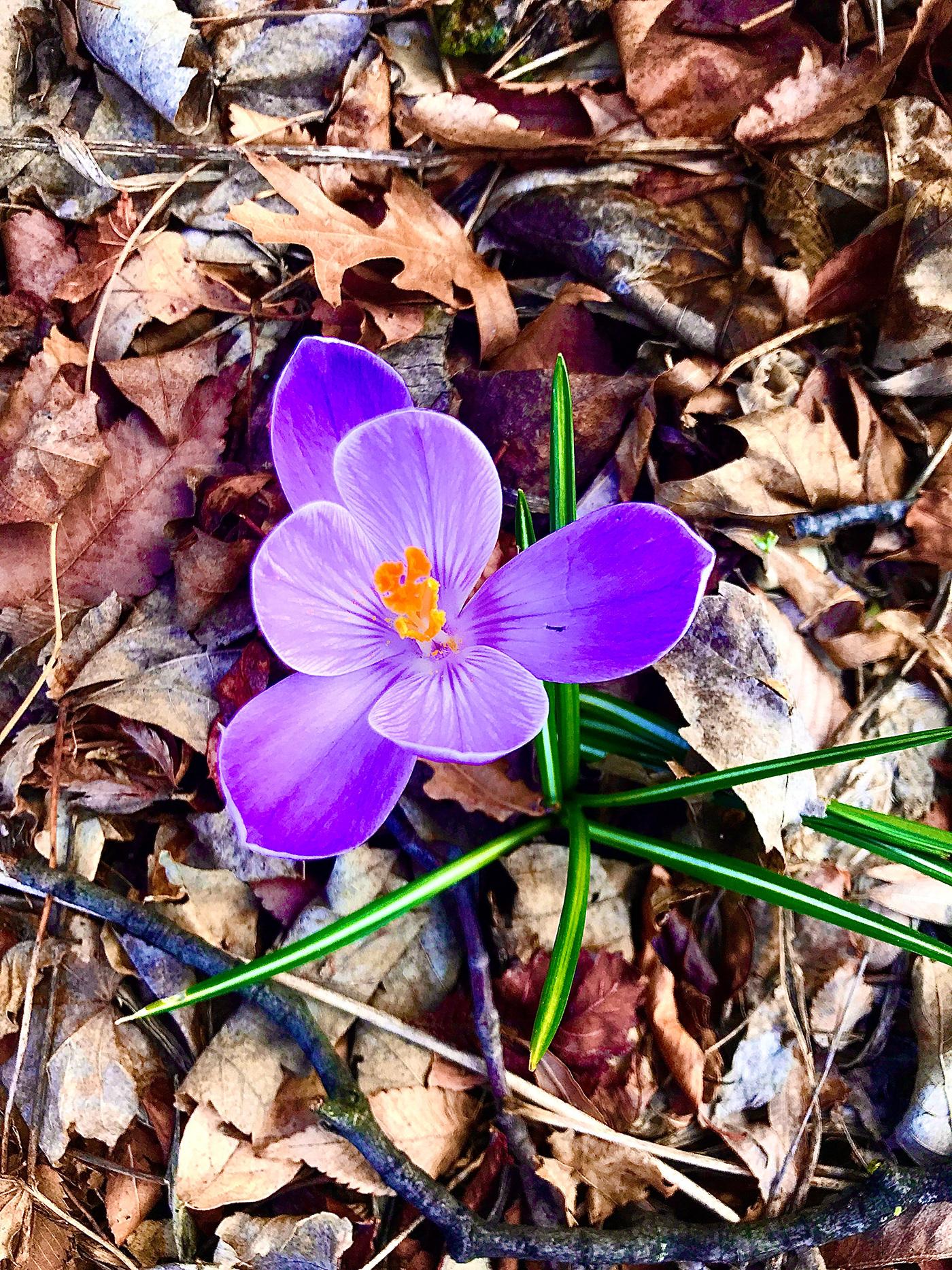 Flowers purple rain