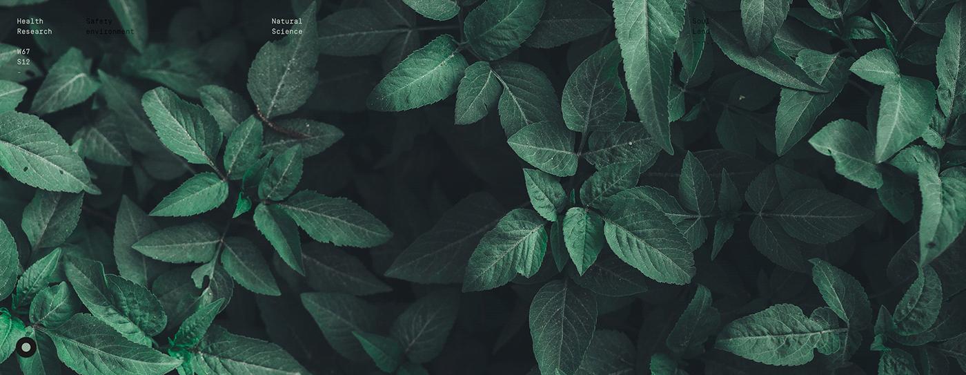 app conceptual digital Health medicine minimal natural sustentable vegetal