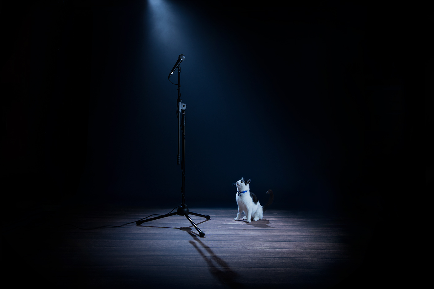 dogs cats animals UK animal abuse campaign