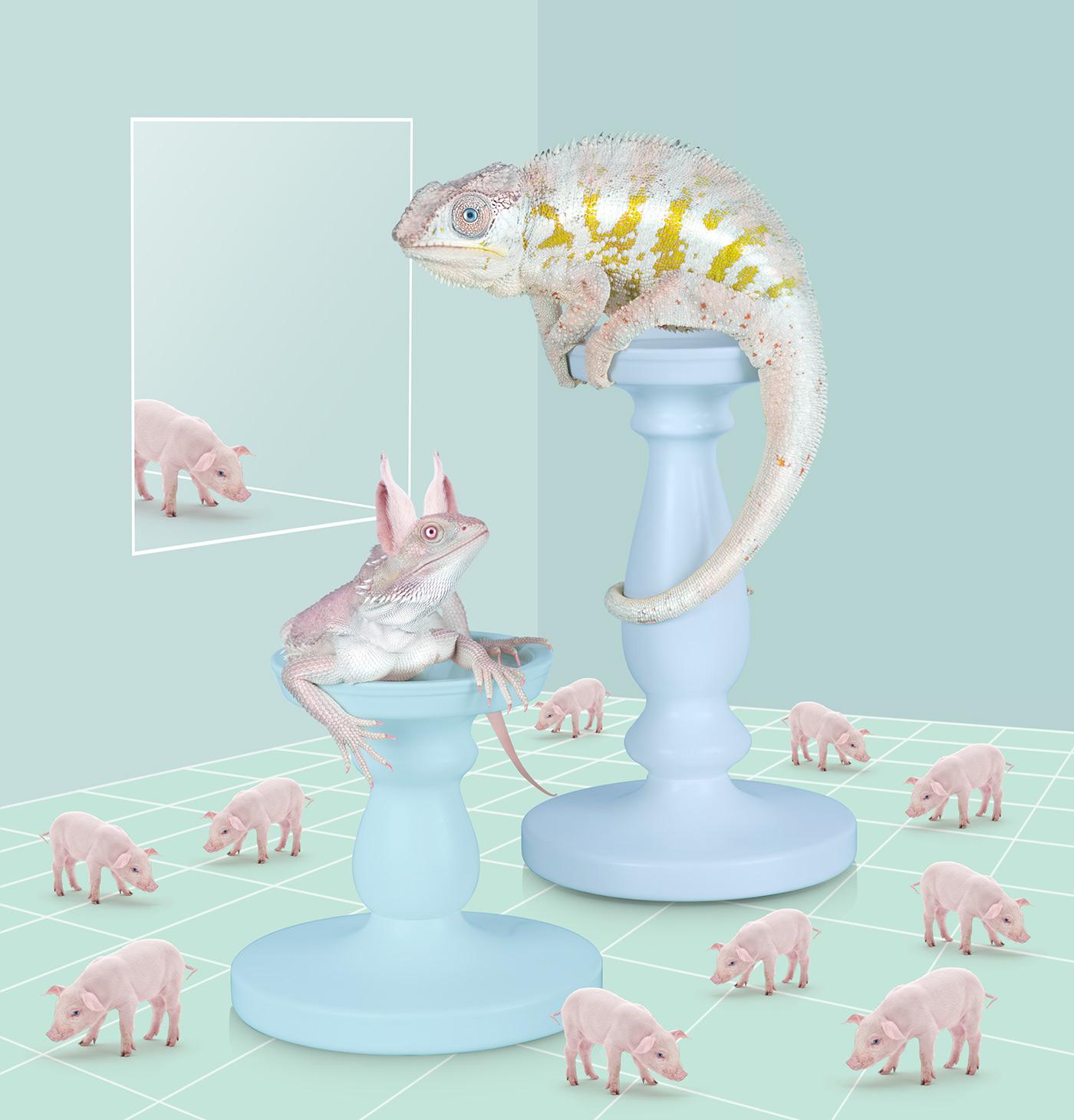 art animal animals contemporary art Contemporary Istanbul Behance 3D pig