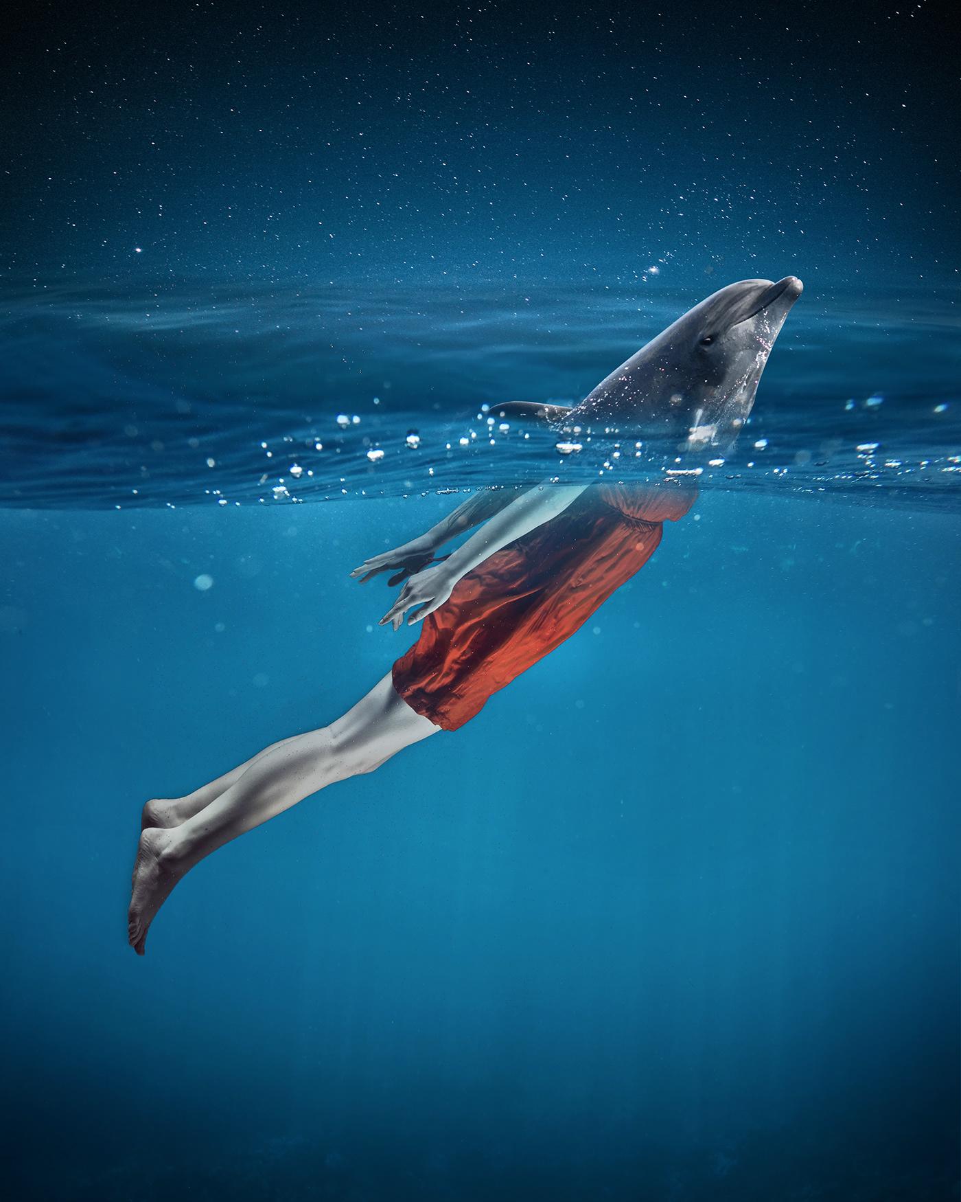 postproduction manipulation composition photoshop adobephotoshop sea retouching  postpro dolphin unsplash