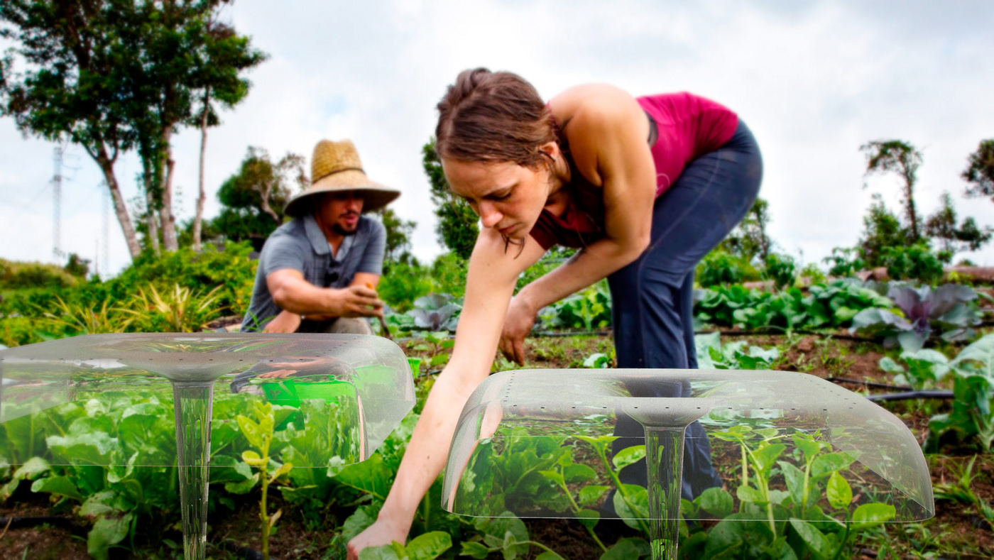 Agricultural crops design ecological farm industrial design  plants product design  recycling social