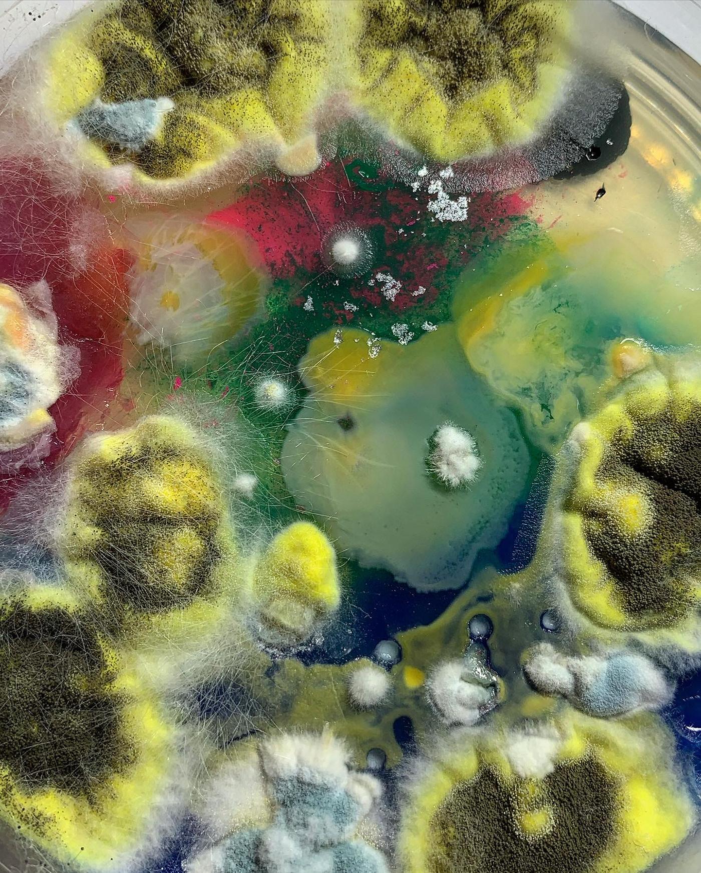 art background bio bioart colour design FINEART Fungi Greens human inspiration la mix molds Nature pattern Photography  science spores textured