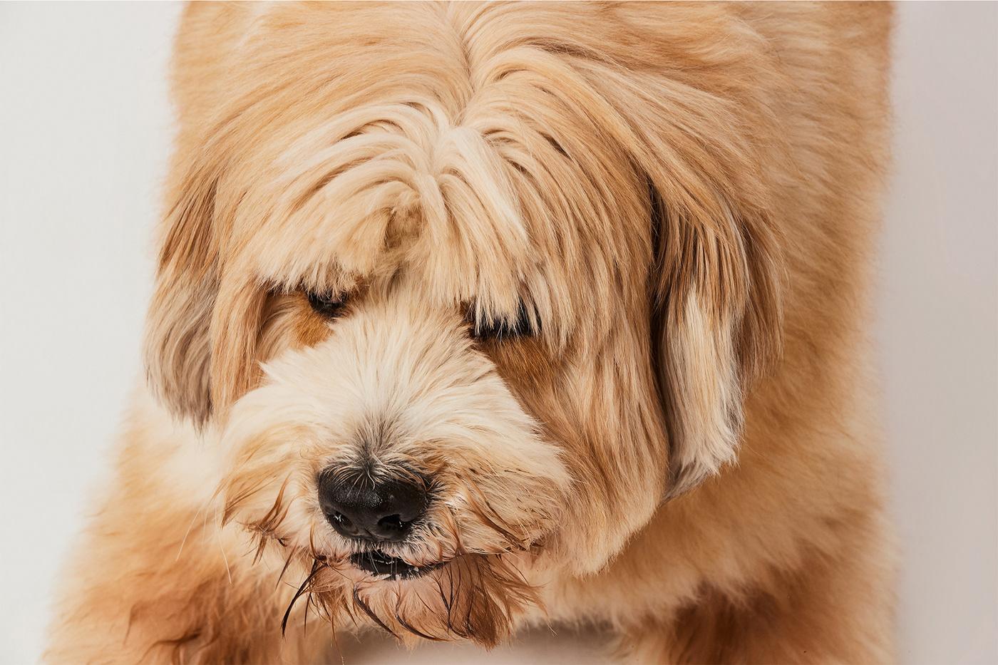 Image may contain: dog, animal and mammal