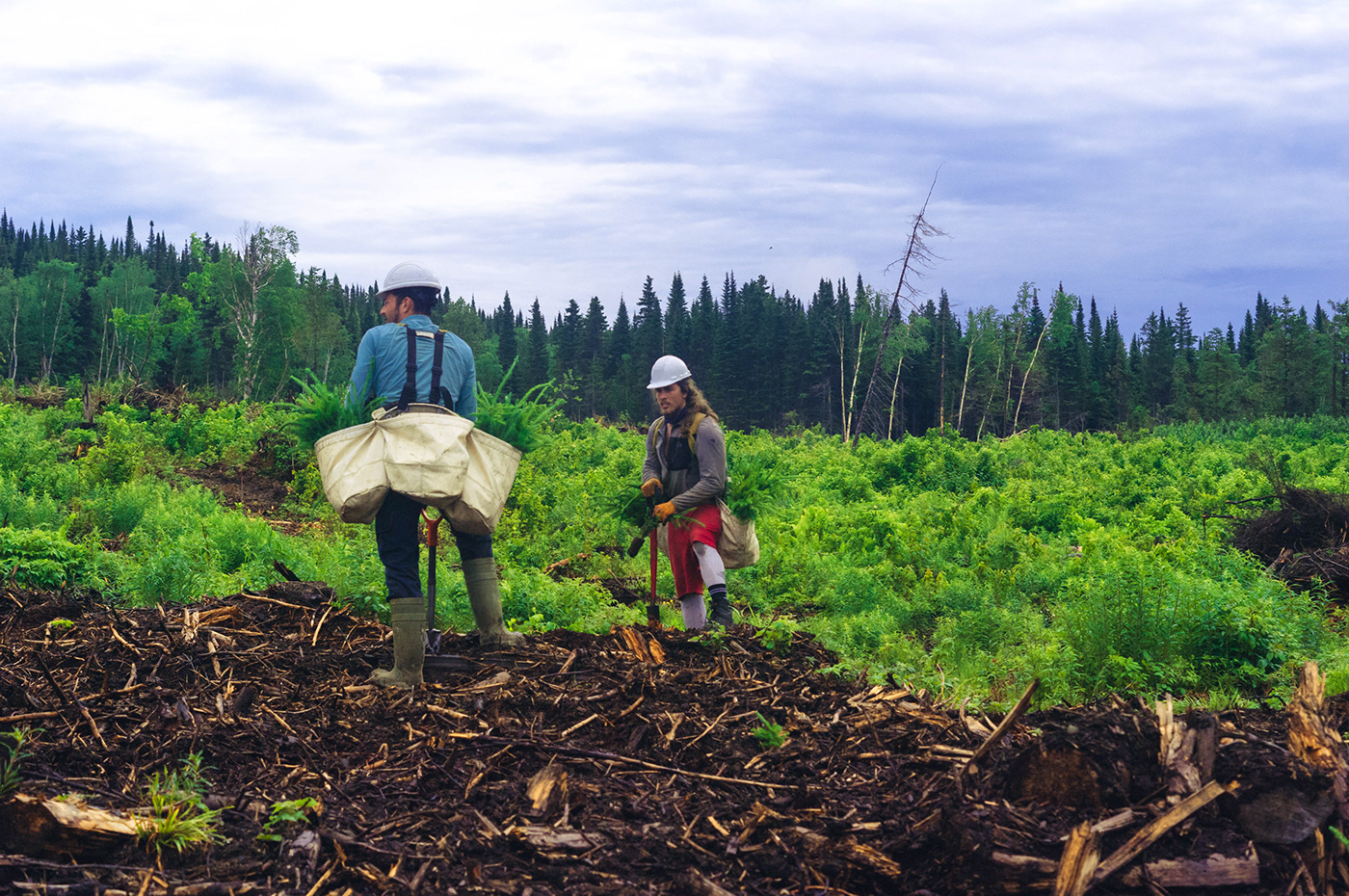 Tree Planting,Documentary ,Photography ,gaspésie,Canada,forestry