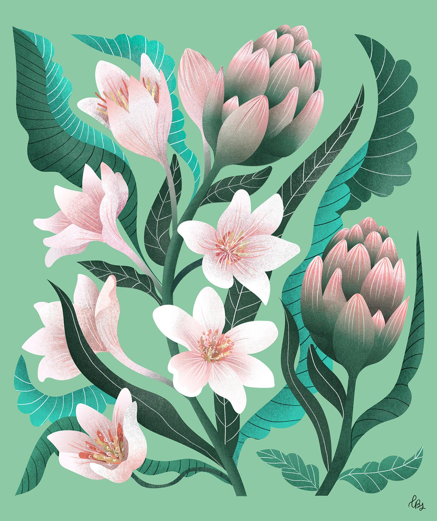 art direction  botanical botanical illustration floral illustration Flowers graphic design  ILLUSTRATION  Nature nature illustration spring