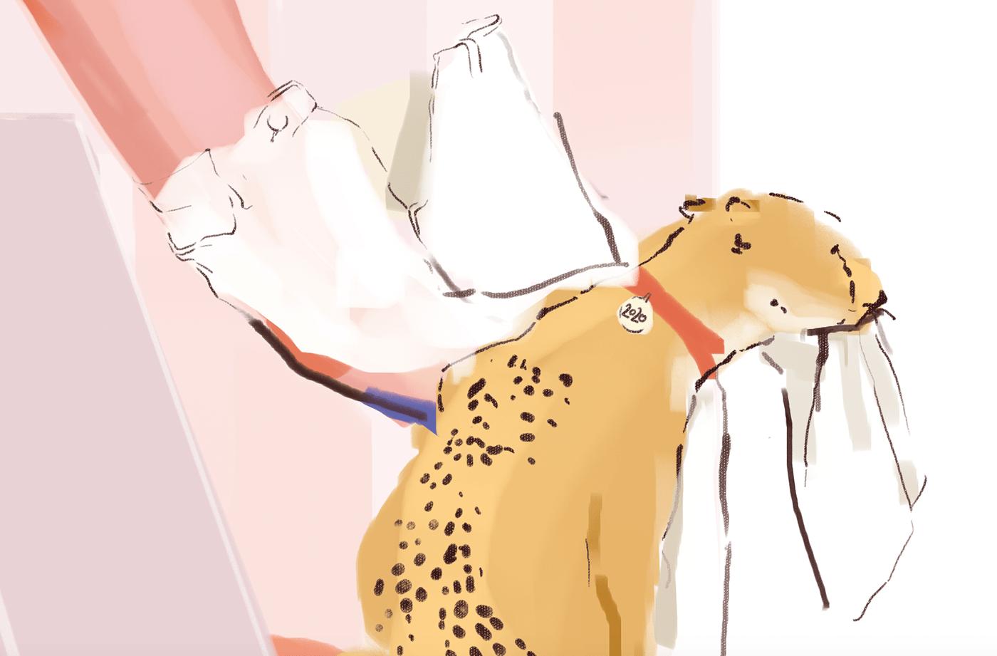 cheetah Drawing  ILLUSTRATION  jump lick man new year pink woman