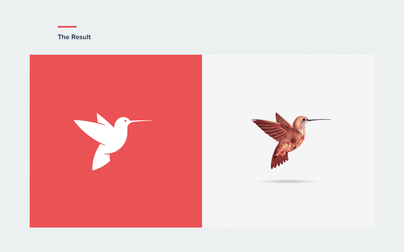 red Theme engine hummingbird bird logo redesign wordpress Web viet nam vietnam