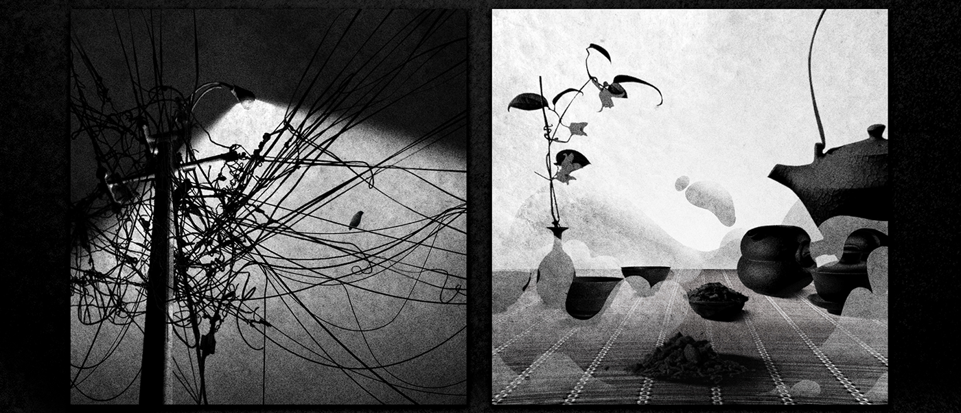2D Animation black white Ricefields asia Poetry  contemplation photoshop peaceful Travel South East Asia