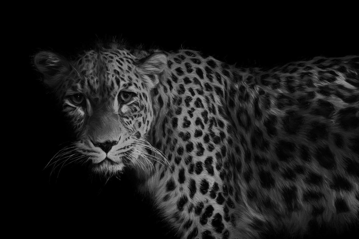 Image may contain: big cat, mammal and animal