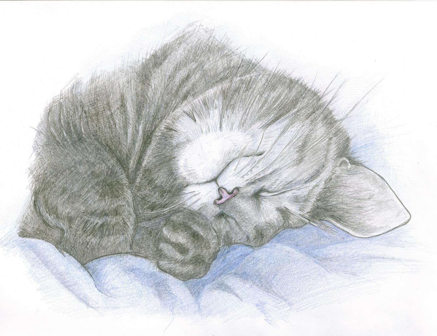 Спящая кошка картинка нарисованная