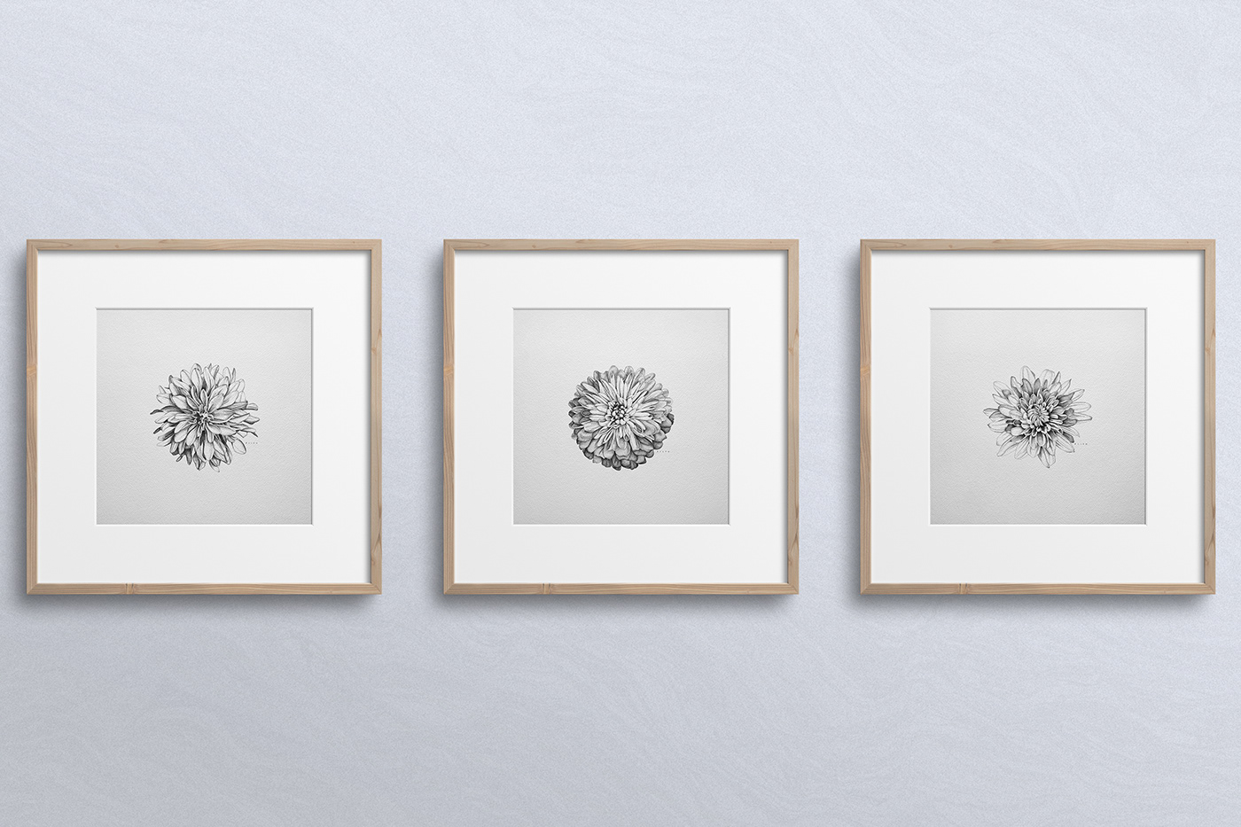 Chrysanthemum dotwork Drawing  flower ILLUSTRATION  pen and ink Pointillism stippling
