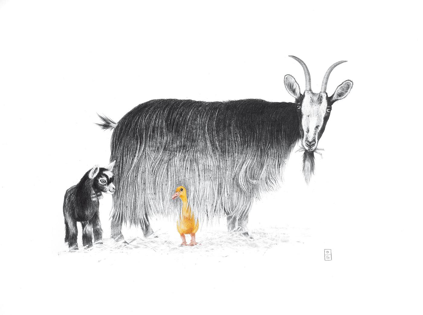 animal,farm,pig,Goose,sheep,chicken,Drawing