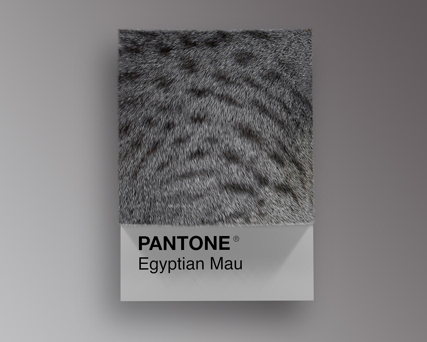 pantone,colors,3D,cats,animals,dogs,Cat,dog,persian,bengal