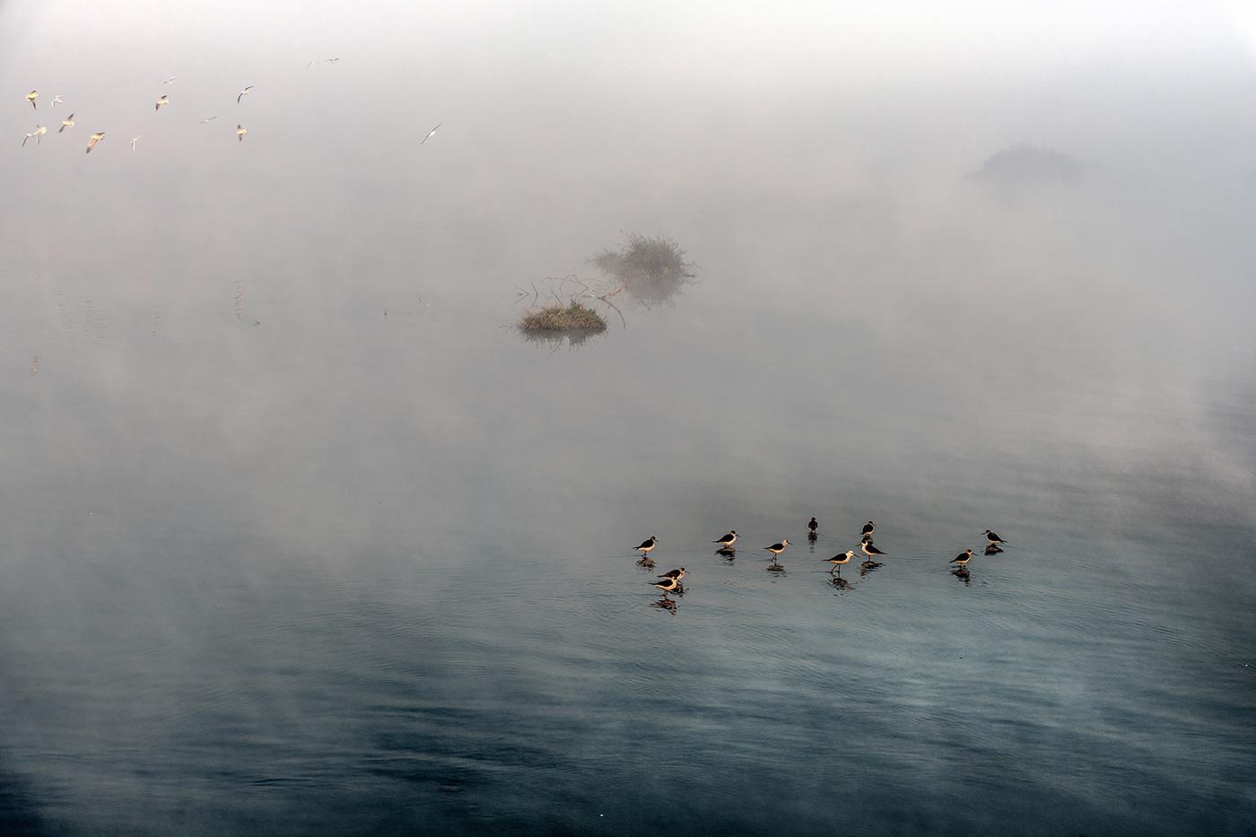 Image may contain: bird, lake and water