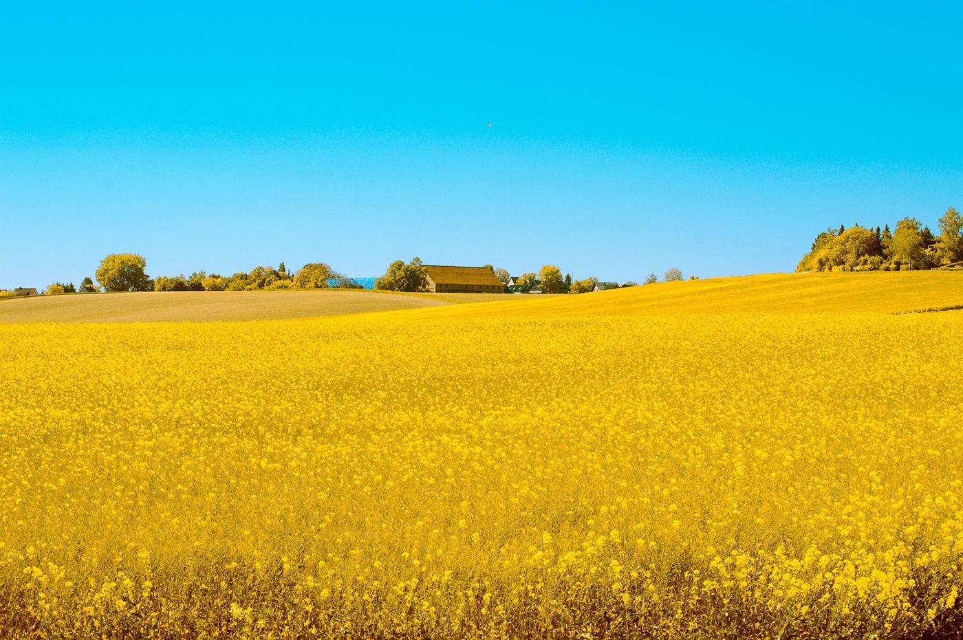 colorful countryside field fields geometry Landscape Landschaft Nature Photography  vegetation