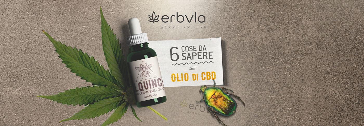 brochure cannabis CBD design Hipster marijuana oil Quadfold square