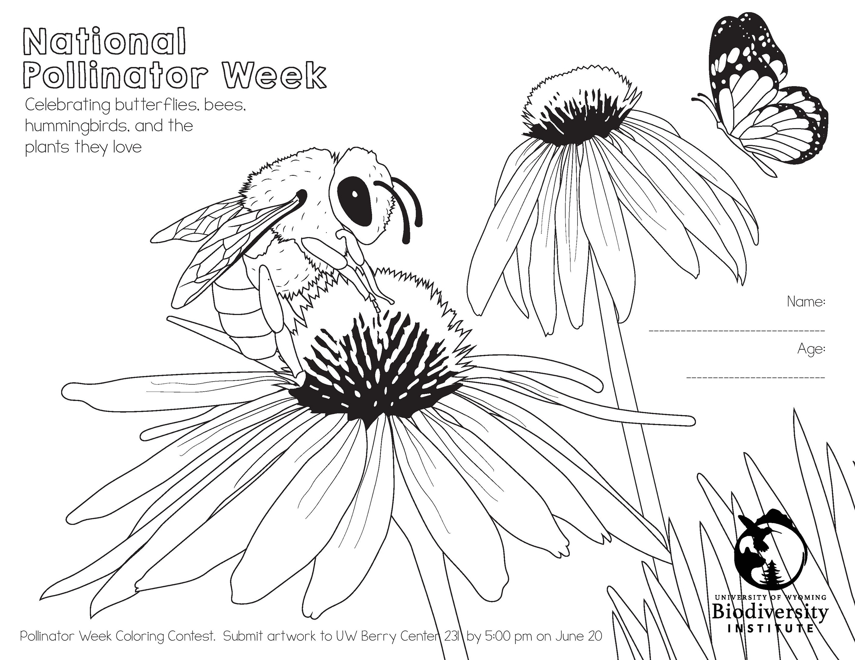 Coloring Page Bird and Butterfly Chat