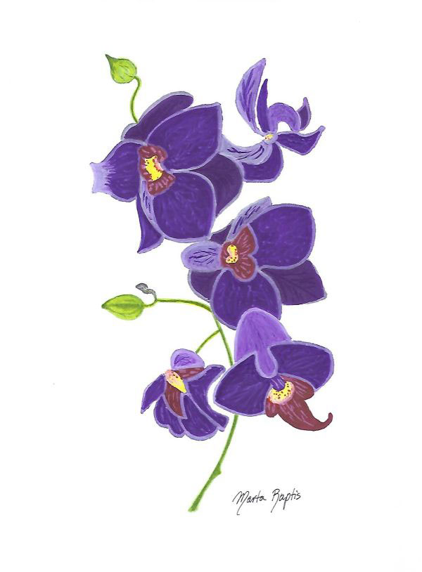 Purple Orchid Drawing On Behance