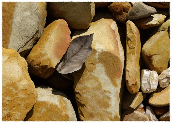 rocks bark texture Landscape Nature natural elements leaves pebbles stones