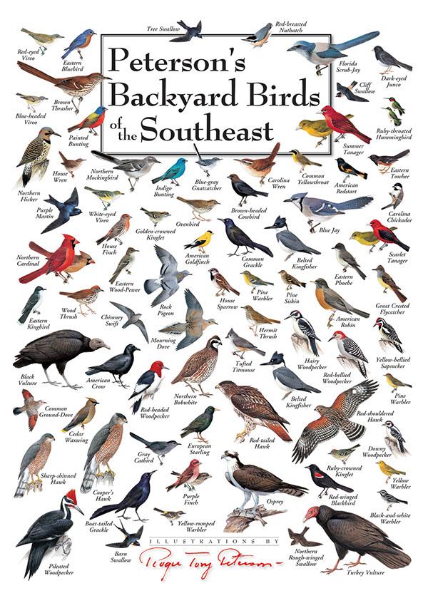Peterson Bird Posters - Design on Behance