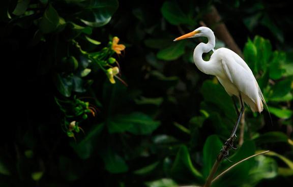 Discover puerto rico on pantone canvas gallery for Bodas en el jardin botanico de rio piedras