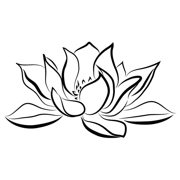 Lily Tattoo Line Drawing : Water lily on behance