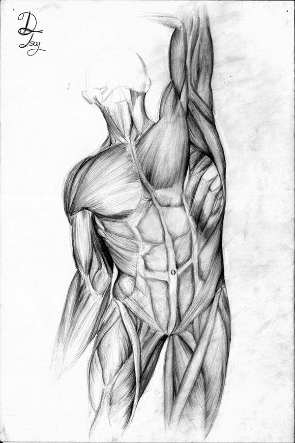 Anatomy Figure Drawings on Pratt Portfolios