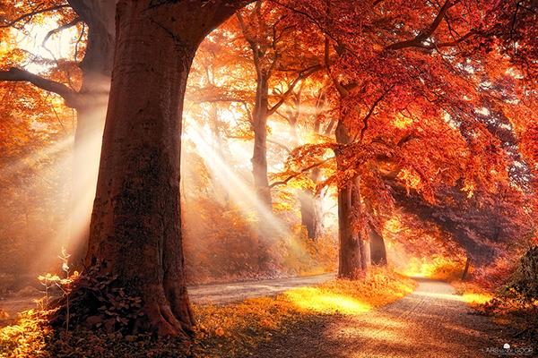 Herbst Bilder