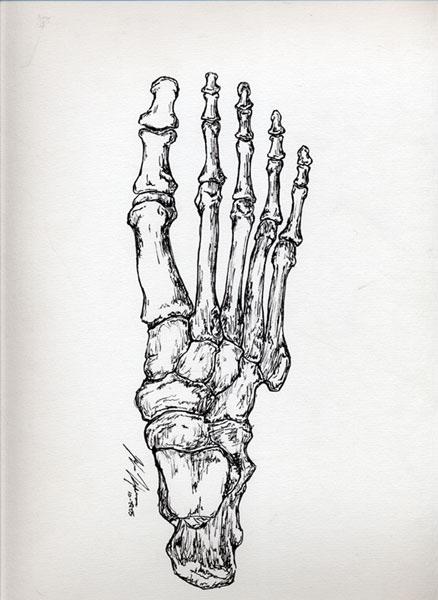 joann hansen anatomical drawings