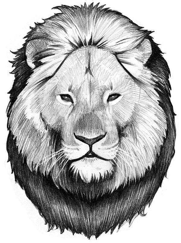 Hipster lion drawing - photo#11