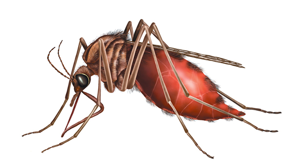 is carisoprodol harmful insects pictures