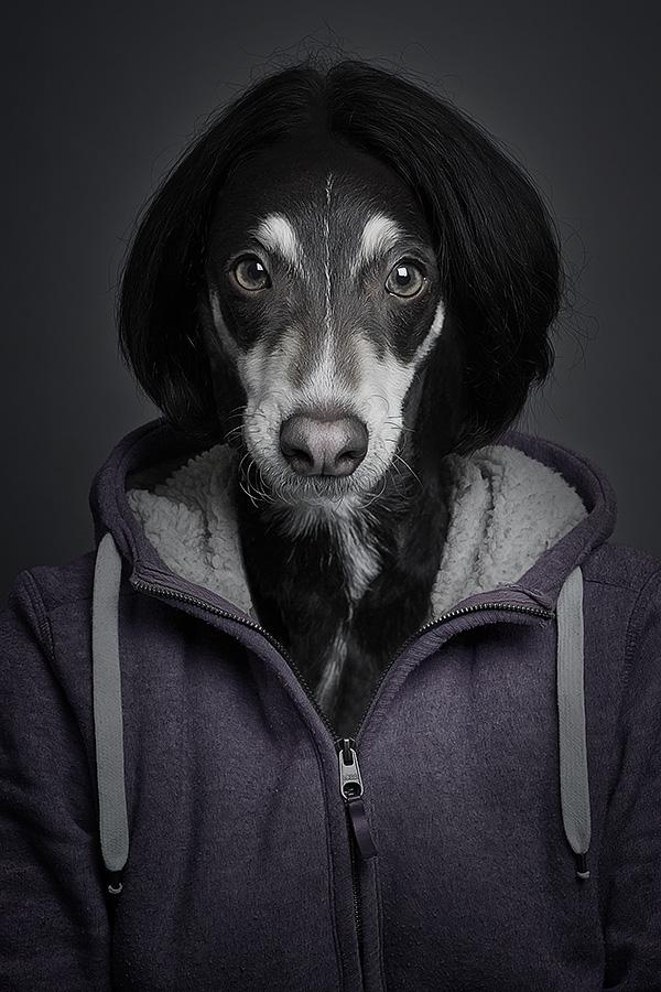 dog dogs Pet pets puppy puppies animals bestfriend underdog UNDERDOGS