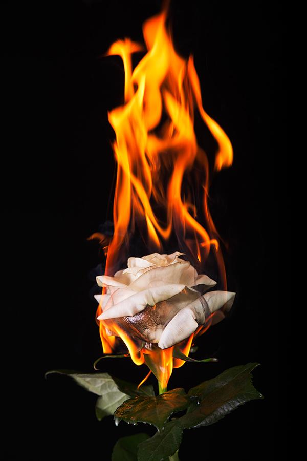 fire flowers on wacom gallery