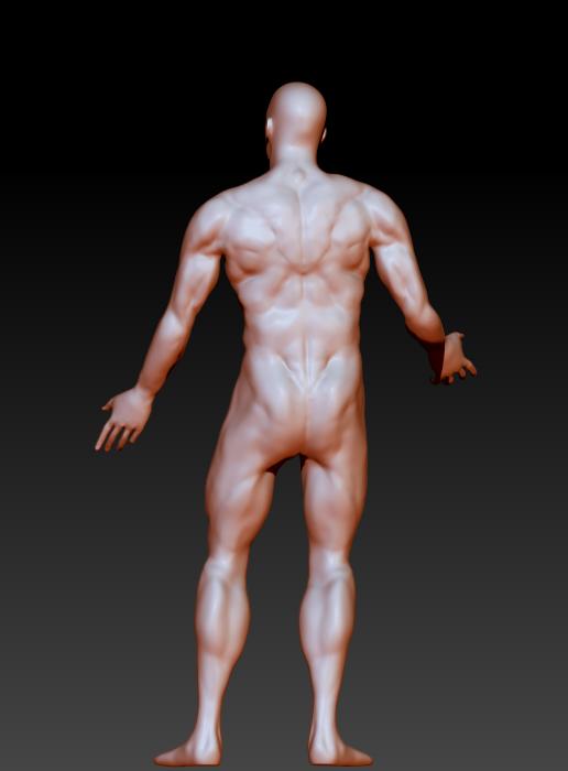 Male Anatomy Study on Behance