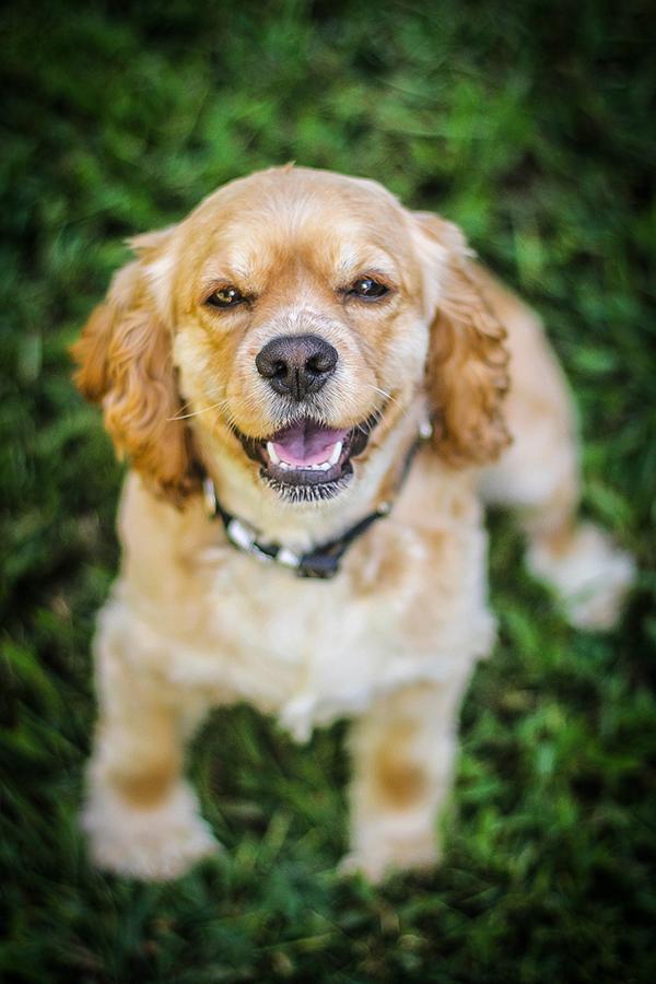 amusment park Senior Portraits portraits pet photography pets