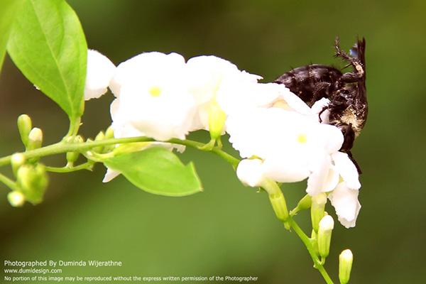 Duminda,Dumidesign,insect